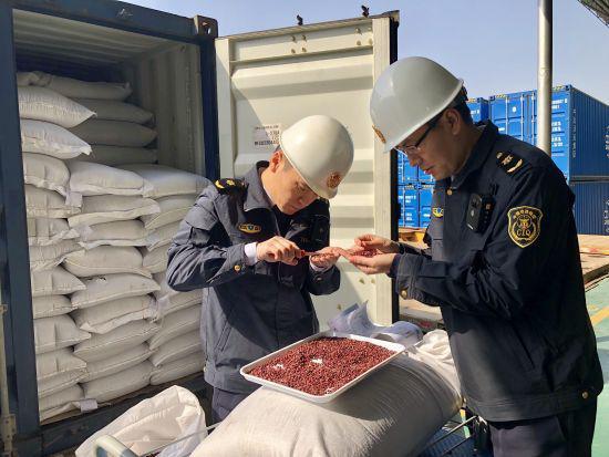 """图为截获检疫性有害生物""""四纹豆象""""。宁波出入境检验检疫局提供"""