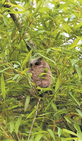 丽水一户人家守着深山老房子30年 保护野生猫头鹰