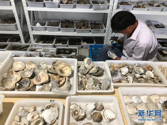 浙江余姚发现早于河姆渡文化1000年的史前遗址(图)