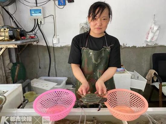 """台风""""黑格比""""走了 刚爬上杭州人餐桌的梭子蟹受影响"""
