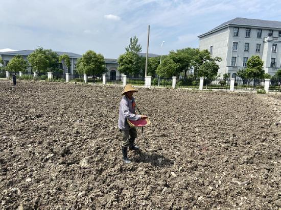 工程建设项目闲置地变身旱稻田 10月份将迎来首产