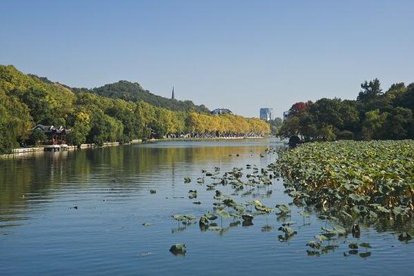 秋雨之时西湖枯荷