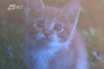 宁波一女子免费领养猫被骗六万