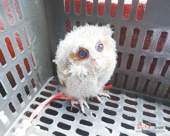 萌萌的小家伙小巧可爱,长着一双蓝色的大眼睛,不时眨巴眨巴着,爪子