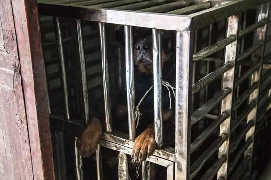 杭州少女看狗可怜打开笼子 被咬伤后缝了120多针