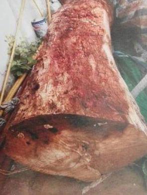 温州骗子200元烂木头168万卖出