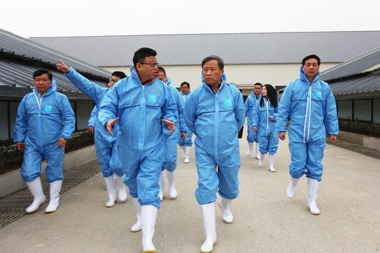 孙景淼副省长(前排右)一行参观网易味央养殖现场