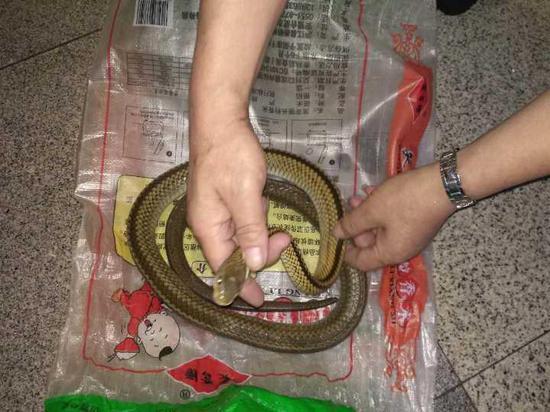 杭州城站安检机发现一条活蛇 大爷想带回老家吃