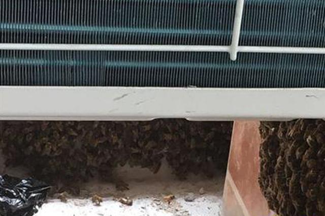 杭州一新房涌进了上万只蜜蜂 看得人头皮发麻