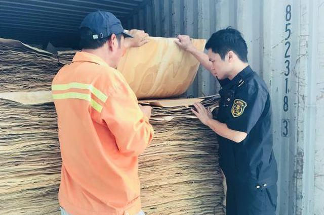 宁波截获从泰国进口橡胶木板 有不少活体有害昆虫