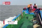 受安比影响 舟山海蜇捕捞量骤降