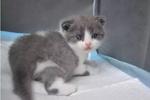 温州小伙25万元复活爱宠 中国首只商业克隆猫亮相
