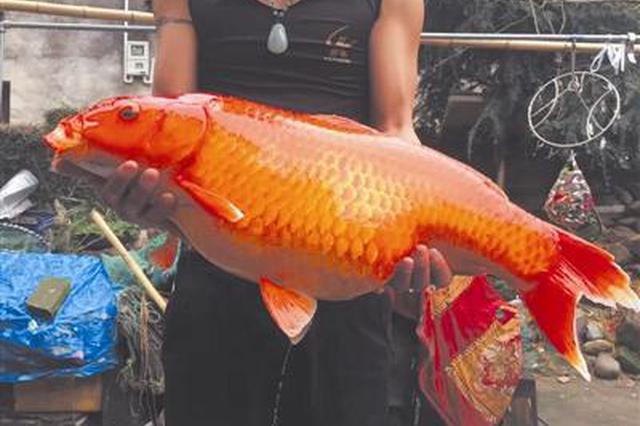 温州男子在自家鱼塘发现70公分长田鱼 村民跑来合影