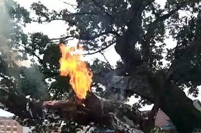 绍兴600年古树神秘失火 为灭火抽干2个水塘的水