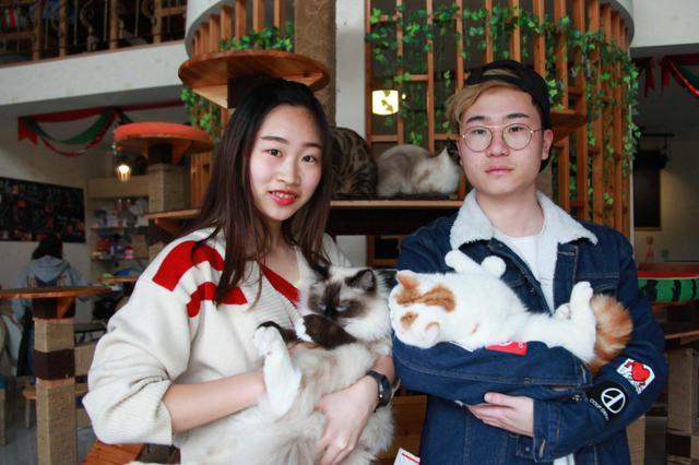 杭州大二学生创业当老板 找了10多只猫当员工