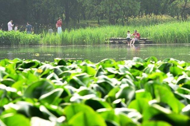 夏天一到就给了下马威 浙江将迎来一整周的蒸笼天