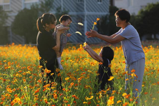 杭州临安垃圾场变百花园 鲜花盛开美不胜收