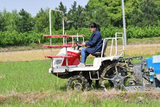 嘉兴90后女大学生回乡种田 从会计变身田间驾驶员