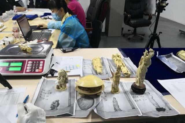宁波海关移交濒危野生动物及其制品 查获标本千余件