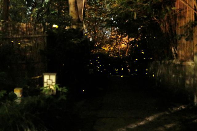 杭州萧山戴村惊现萤火虫群 数千只漫天飞舞环绕身旁