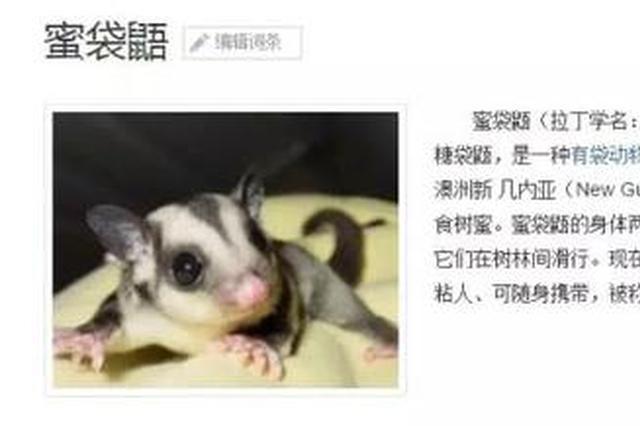 嘉兴男子花2万网购抖音网红蜜袋鼯 付款后卖家躲猫猫