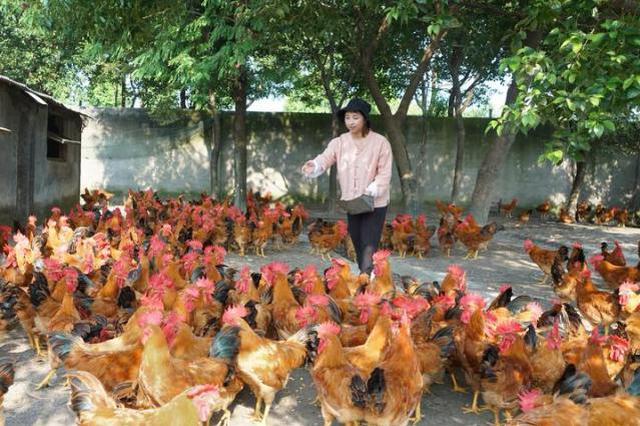 鸡蛋卖10多元一个 嘉兴90后姑娘返乡办起月子农场