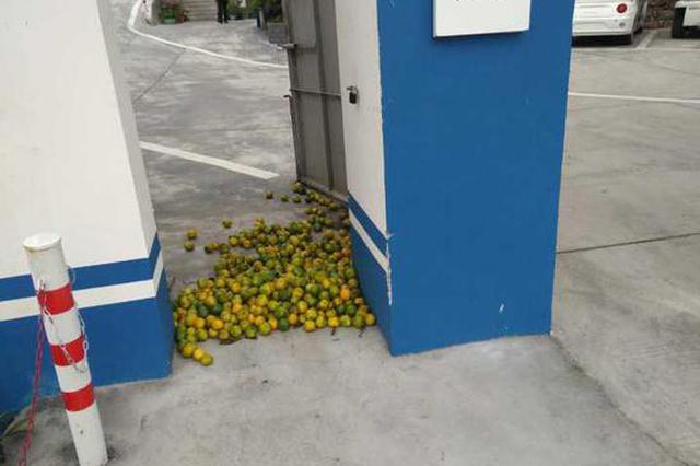 用40斤烂橘子堵住城管大门 衢州小贩被警方警告