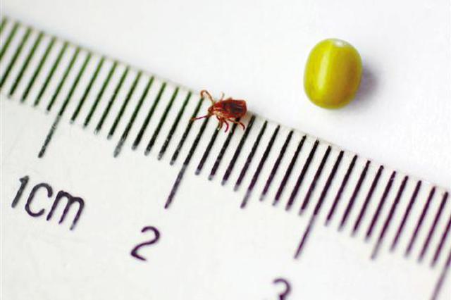 湖州56岁大姐高烧不退病情危急 罪魁祸首是1只小黑虫