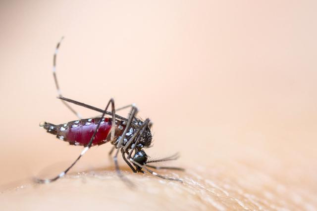 浙江六旬老司机总感觉眼前蚊子在飞 路上差点撞车