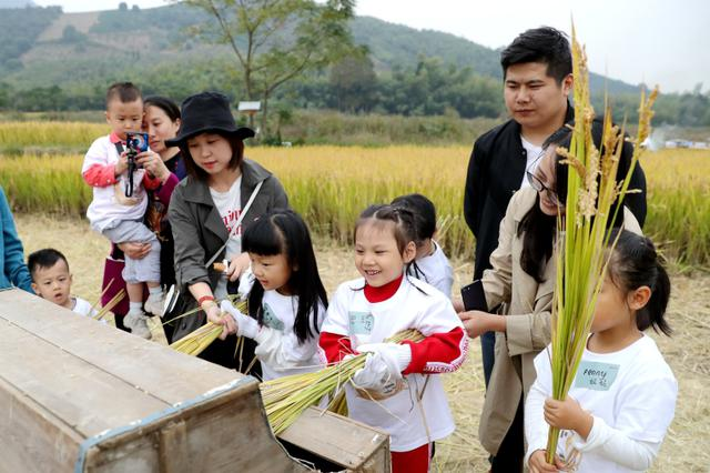 德清亲子割稻打谷 体验农耕生活