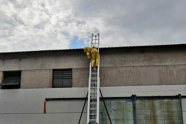臺州一廠房馬蜂高駐員工人心惶惶 消防15米拉梯摘除