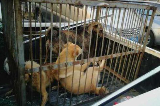 杭州文二路流浪狗有点多 城管队员2小时捕了8只