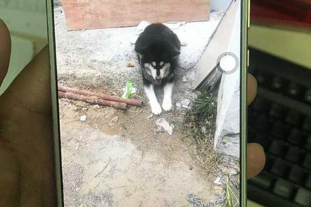杭留下派出所吃貨阿拉斯加犬找到主人 民警:舍不得了