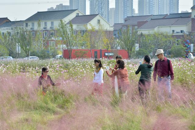 旧村变景区 杭州这里还有一大片花海