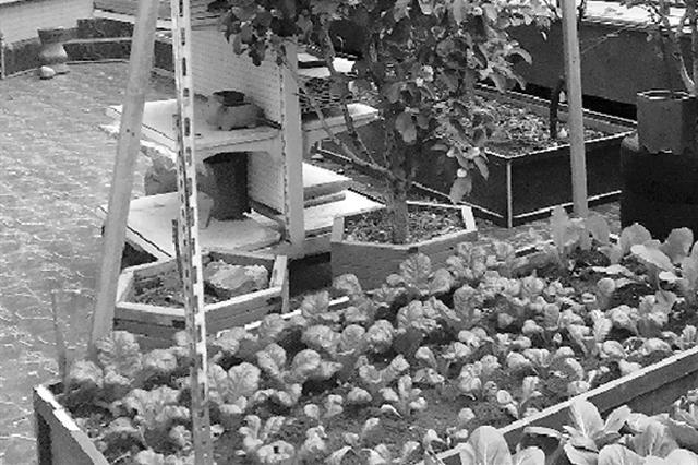 杭州1住戶在小區公共平臺搭玻璃房 屬違建將拆除