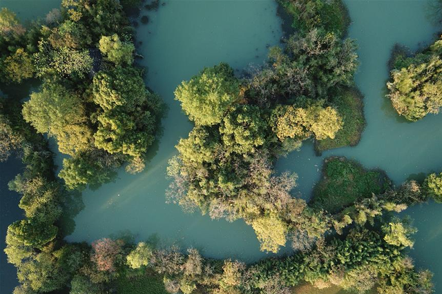 航拍西溪湿地 杭州秋色渐浓