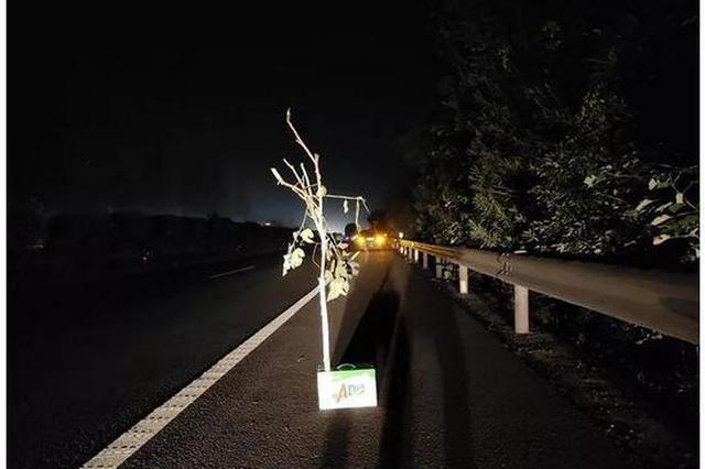 汽车高速抛锚缺少三角牌 宁波一司机折树枝放在车后