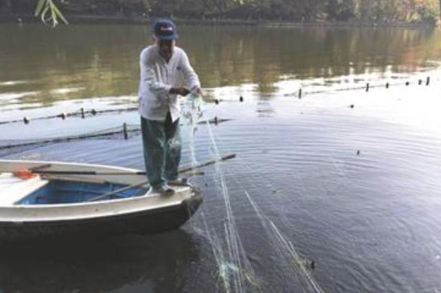 杭州西湖昨紧急换丝网 只为保护小鸳鸯安全