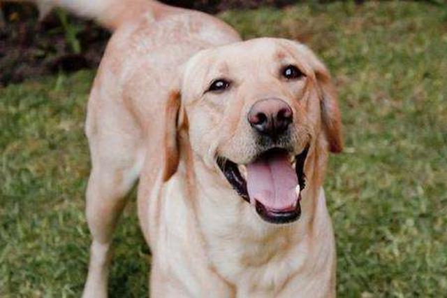 杭州养狗市民发问:我有两套房子能养两条狗吗