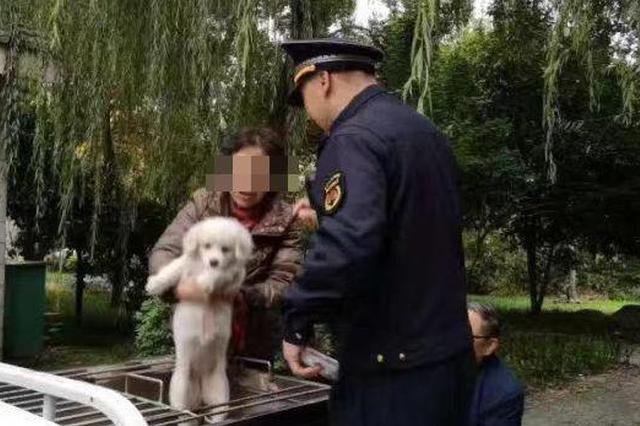 杭州城管4天受理犬只办证11106件 均免费注射疫苗