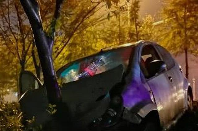 温州1男子醉驾差点要一车人命 幸好路边的树救了他们