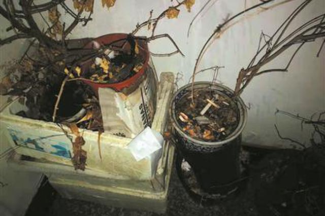 杭男子烟瘾难耐上楼道抽烟 满是烟屁股的花盆着了火