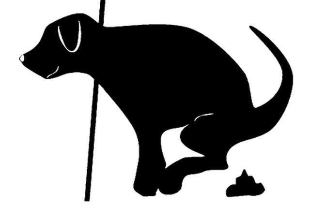 杭州发起国内首个黄粉笔行动 给狗便便画个圈圈