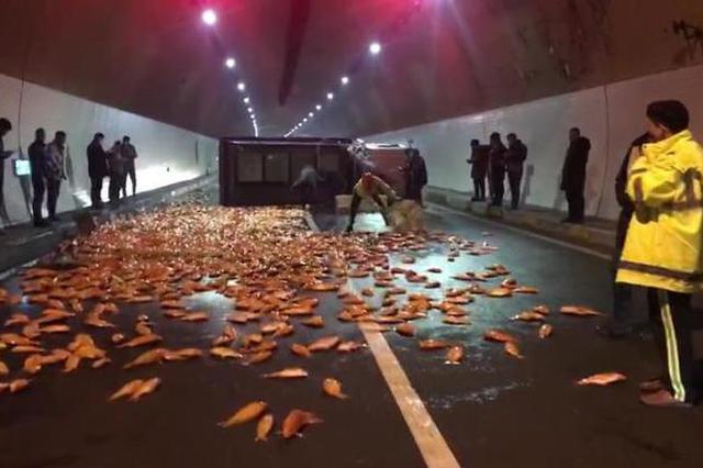 浙江一货车超载高速翻车 6000多斤红鲤鱼路面上乱跳