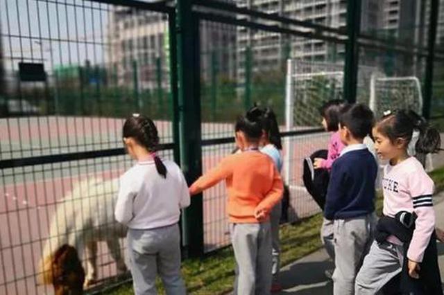 小马生宝宝 杭州一小学要发动全校学生看直播(图)