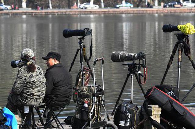 杭州摄影爱好者西湖拍鸟类 长枪短炮成独特景观