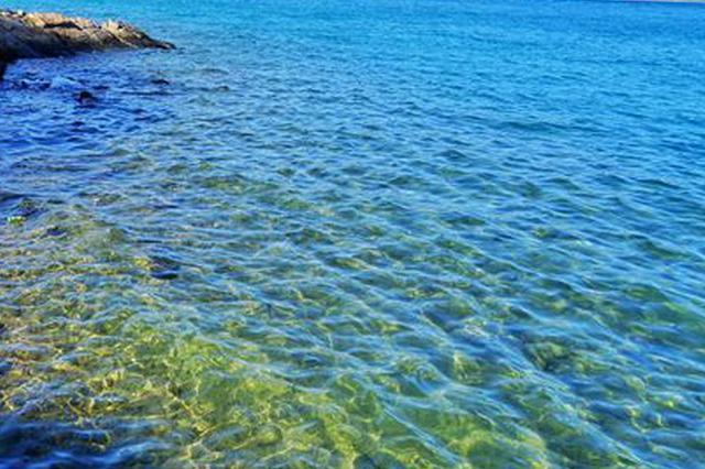 杭州西湖水里出现脏东西 原来是水质清澈所致