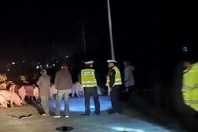 杭州高速交警连夜送油救急 司机被罚款还连连道谢