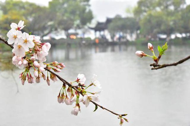 杭湖中三岛景区春意正浓 三潭印月百花争艳春意盎然