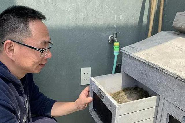 杭州有只鸟儿到居民家里做窝 已经连续五年(图)